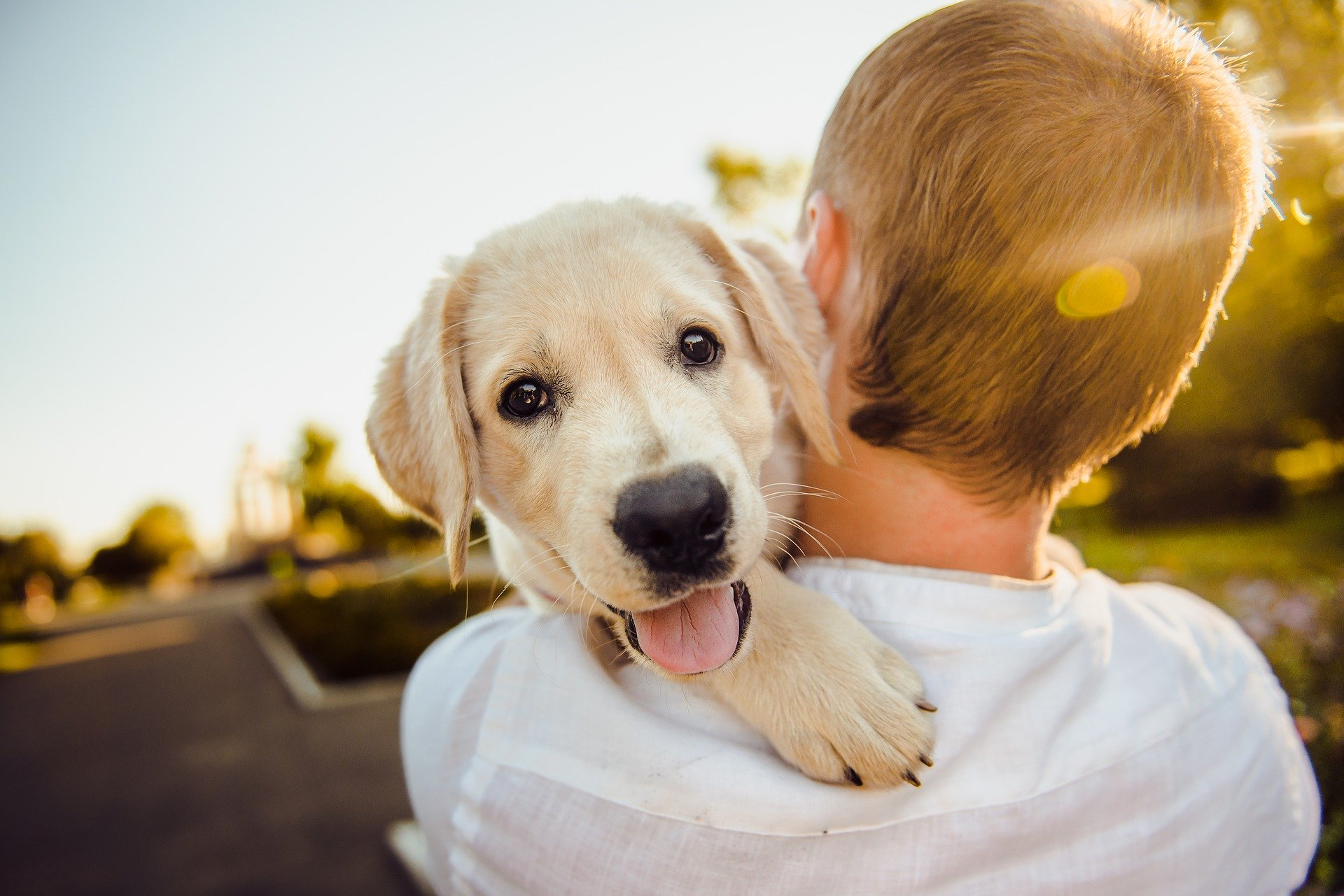 Affordable Pet Medical Treatment